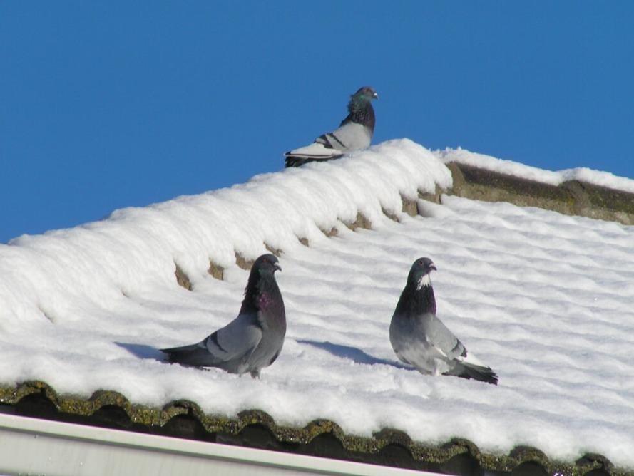 palomas tejado