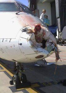 impacto de ave contra avíón