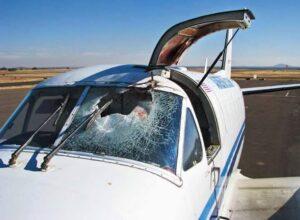 impacto pájaro en avioneta