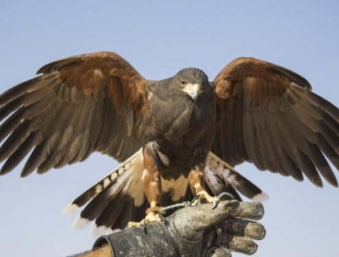 Servicios de control de aves.